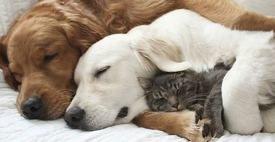 cuddling animals
